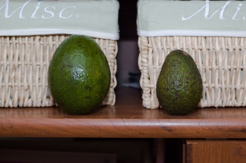 The Slimcado (left) towers over a traditional Hass.  Don't worry, little buddy, you still make the best guacamole.